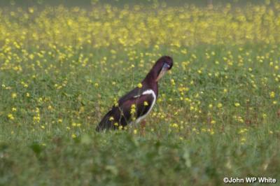 De-Hoop-Abdims-Stork.jpg