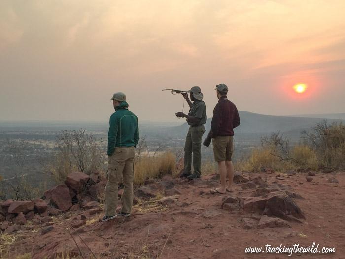 Scanning for leopard's radio collar Okonjima Nature Reserve