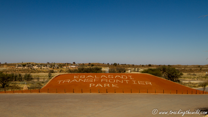 Twee Rivieren Rest Camp at the Southern entrance to Kgalagadi Transfronteir Park