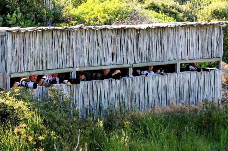 Intaka Island bird hide, Cape Town