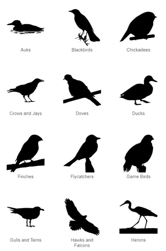 Bird Categories