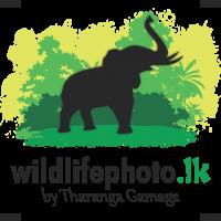 Wildlifephoto.lk