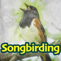 Songbirding Podcast