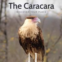 The Caracara