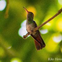 Aves de México / Birds of Mexico