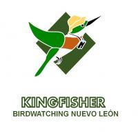 Kingfisher - Birdwatching Nuevo León