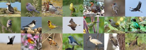 Birding-header