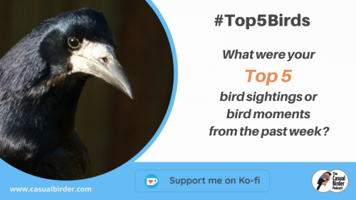 Copy of Top 5 Birds 20201 02 07